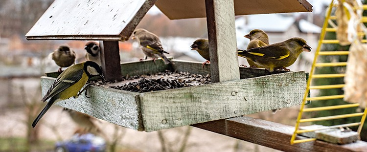 birds on the bird table