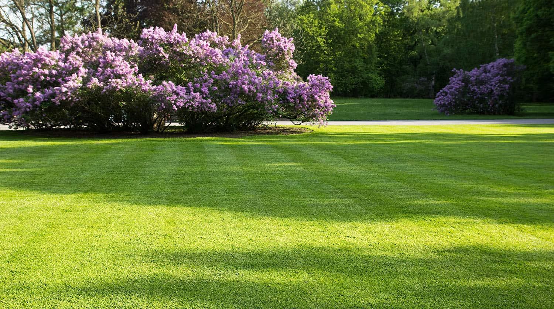 how to level a garden