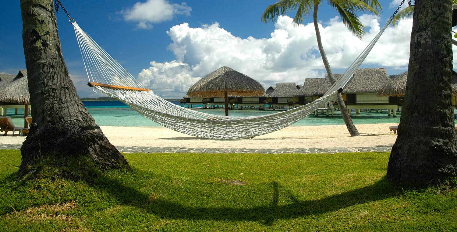 hammock in between 2 trees